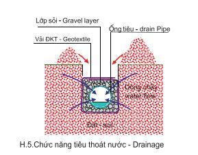 Chức năng tiêu thoát nước của vải địa trồng cây