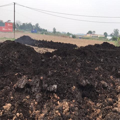 Đất nền trồng cây