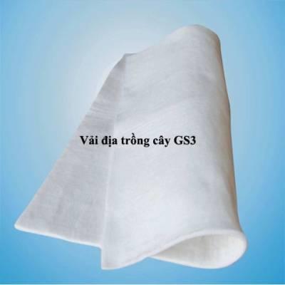 Vải địa trồng cây gs3