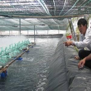Lót hồ nuôi trồng thủy sản bằng màng chống thấm HDPE